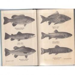 Fresh-Water Fish & Fishing In Africa